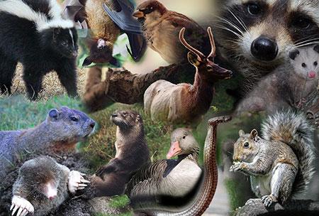 Elizabethtown Wildlife Removal